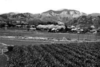 昭和期の大根川