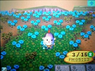 夢のお花畑