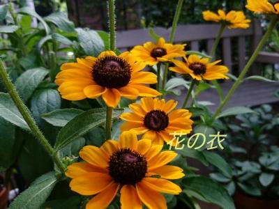 ブログ 花_190806_0012.jpg