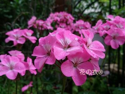 ブログ 花_190806_0016.jpg