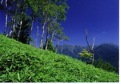 しらびそ高原の夏1