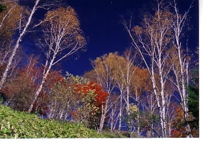 しらびそ高原の紅葉2