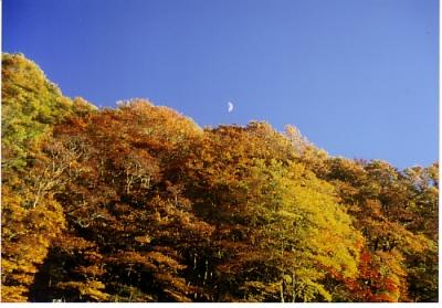 しらびそ高原の紅葉4