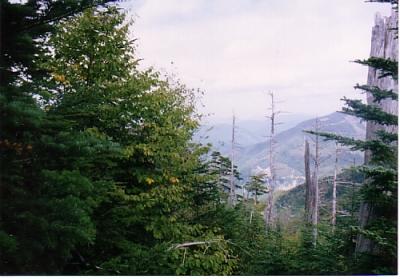 ハイランドしらびそ_尾高山登山コース5