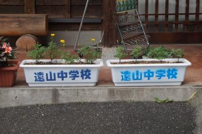 直売所・花アップ.JPG
