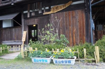 村の茶屋花8.23.JPG
