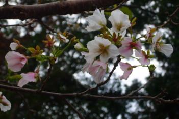来年の春は咲いてくれるの!?
