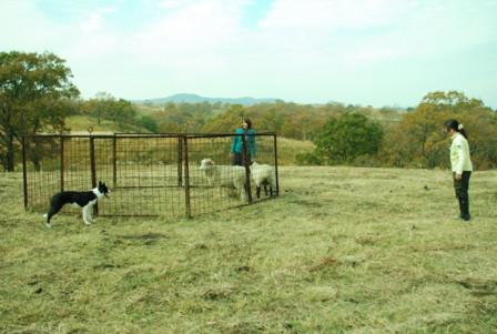 羊追いのレクチャー