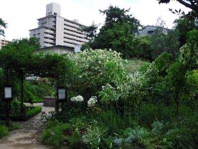 2011宝塚