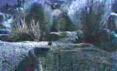 ターミネーター3 蛇登場シーン