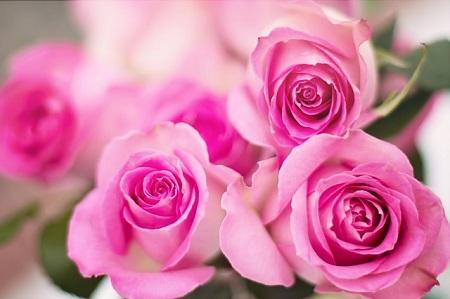 flower_111
