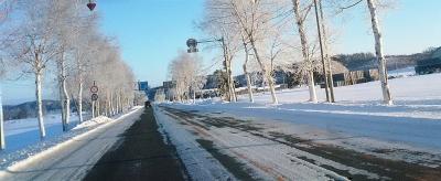 樹氷で輝く白樺並木