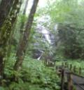 奥入瀬渓流 滝