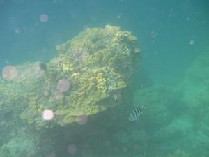 黄色い珊瑚