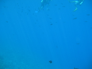 海中スキューバ