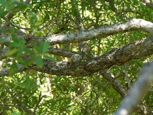 木の上の卵