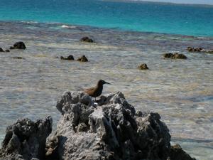 海の上の鳥の巣