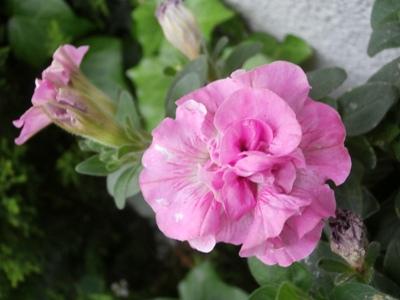 野の花鍼灸院