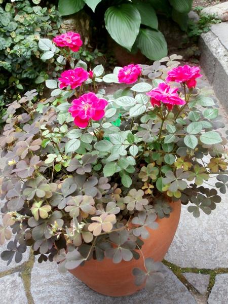 野の花鍼灸院の庭