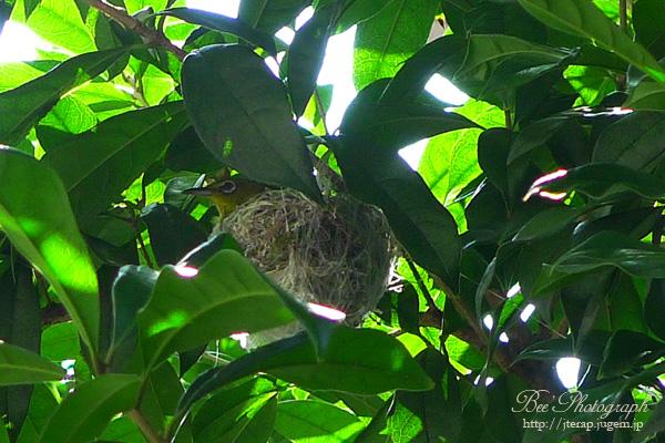 野鳥を呼ぶ - biotopegarden.jp