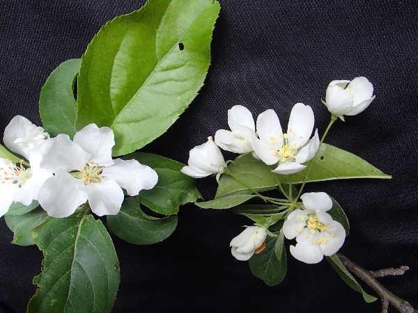 花の比較1