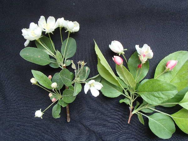 花の比較2