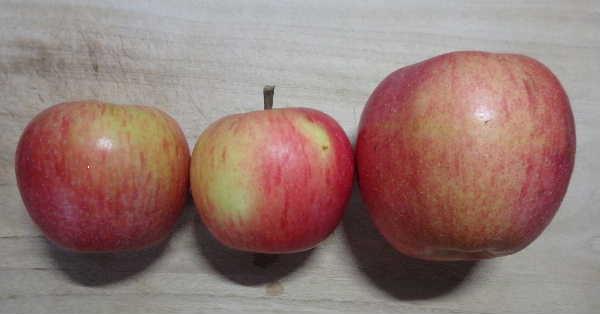 果実横から
