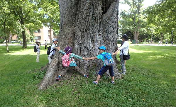 ハルニレの大木