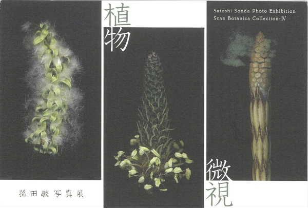 植物微視1