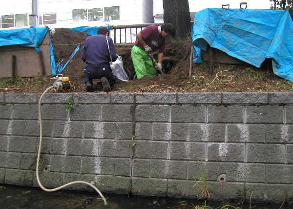 掘り取り作業