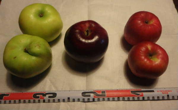 リンゴの比較