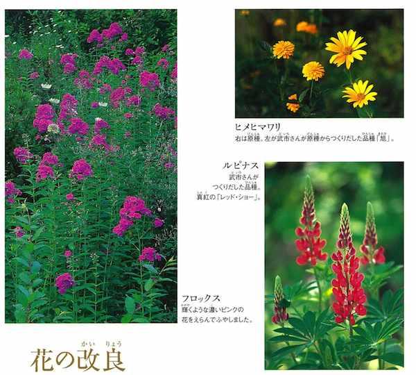 夢の庭づくり6