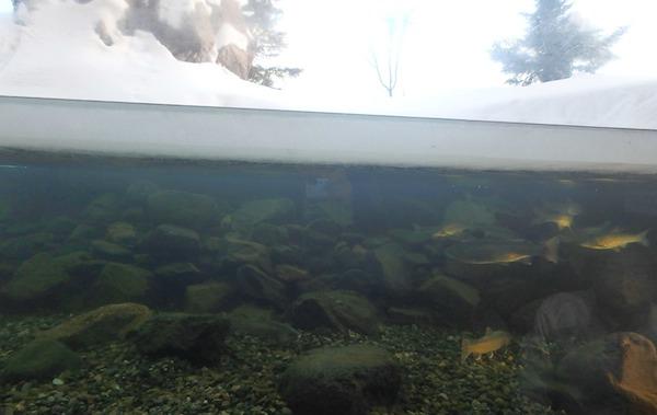 川が凍る水槽