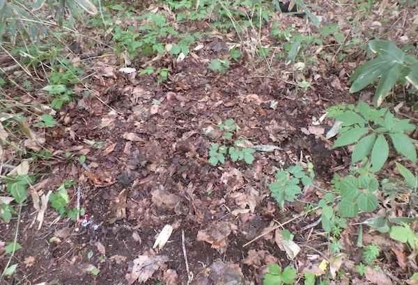 落ち葉のカモフラージュ