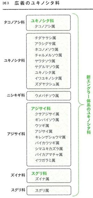 ユキノシタ科