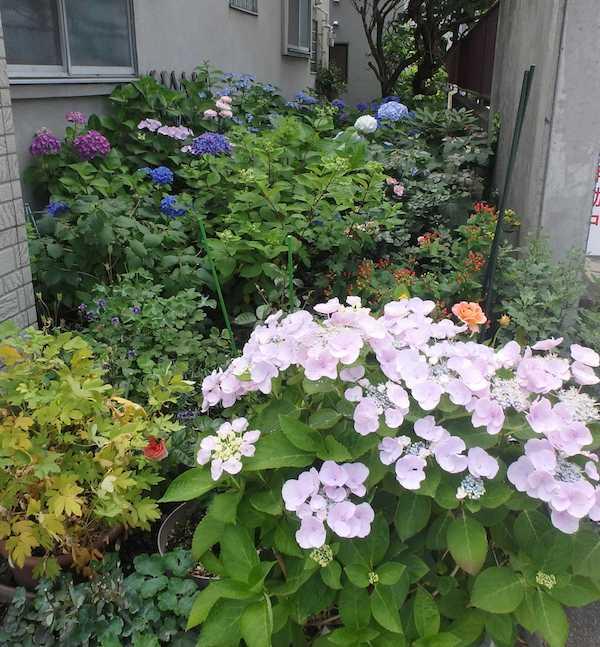 花好きの裏庭