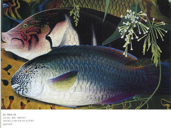 熱帯魚3種