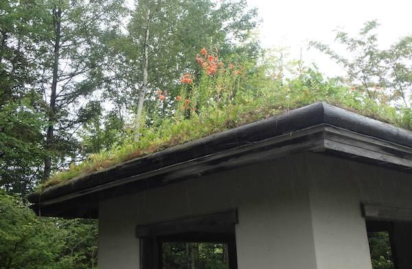 四阿の屋根