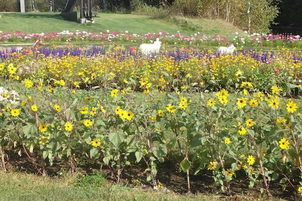ウェルカム花壇