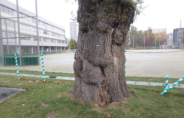 樹齢180年