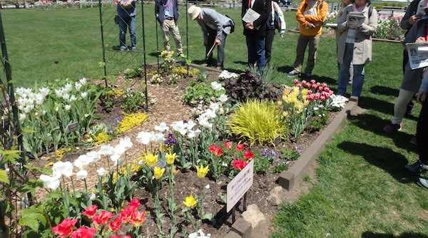 リラの会の花壇