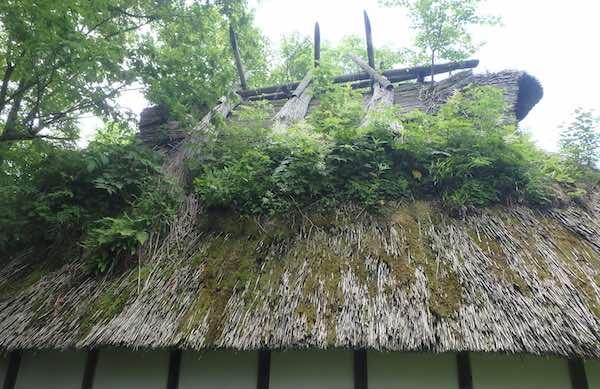 屋根の緑化