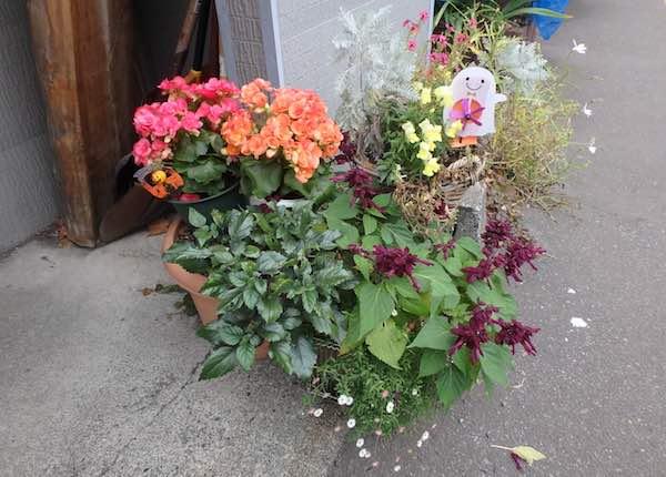 おか田の花