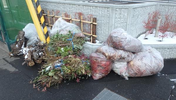 落ち葉ゴミ