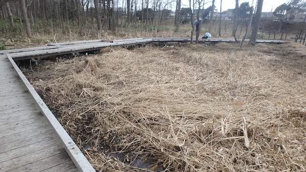 熊の沢公園の湿地