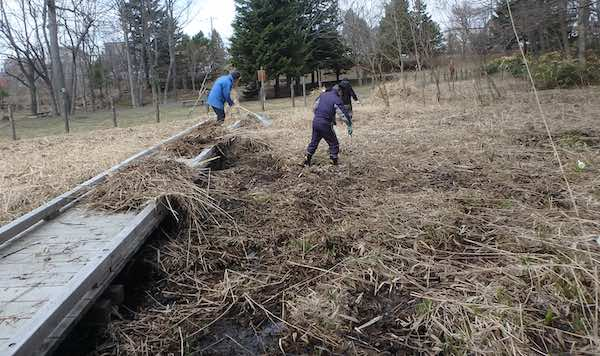 枯れ草の掃除
