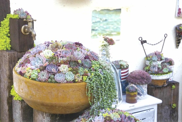 ガーデニングの花