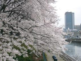 お花見2007