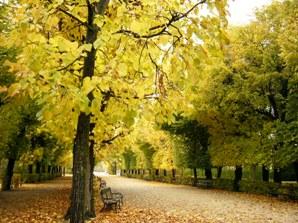 シェーンブルン宮殿の黄葉