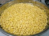 味噌作り2009年2月 一晩吸水後の大豆